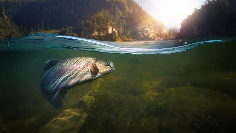 """Peştii de apă dulce, în declin """"catastrofal"""". 80 de specii au dispărut"""
