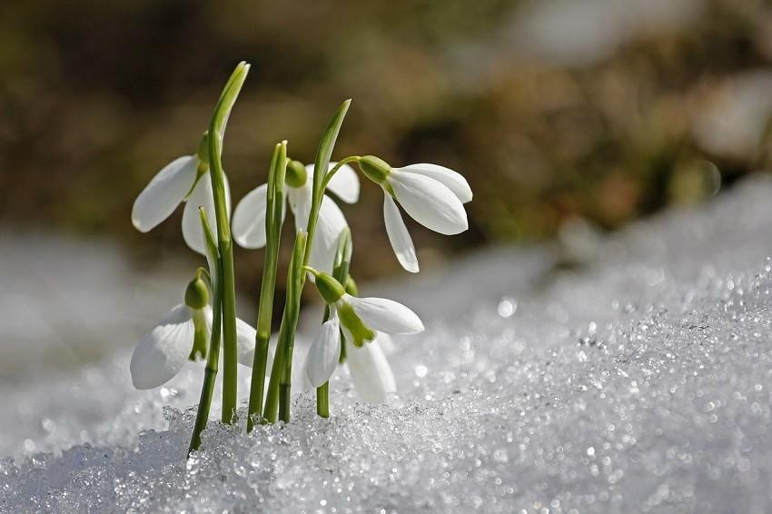 După temperaturi de 22 de grade, iarna revine în 1 martie