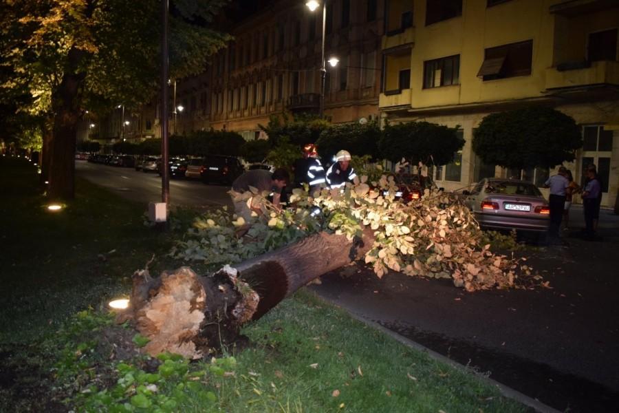Ziua blestemată a BMW-urilor în Arad