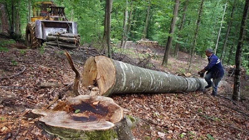 UE cere României să ia măsuri împotriva poluării și să stopeze defrișările ilegale