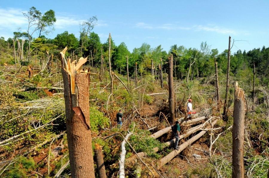 Aproape 10.000 de hectare de păduri, distruse de fenomenele meteo extreme de la începutul acestei luni