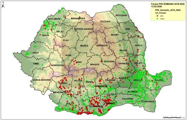 Câți crescători de porci din Arad au fost despăgubiți și ce sumă au primit pentru că animalele le-au fost ucise din cauza pestei