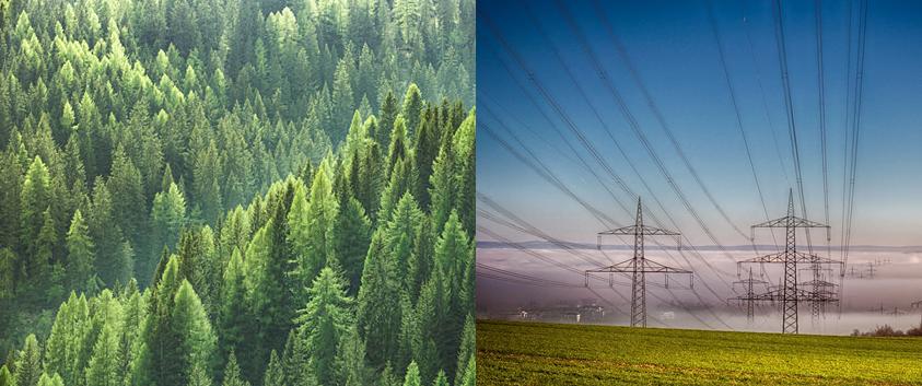 Deturnare de fonduri: pădurile subvenţionează schemele de sprijin pentru energia solară şi eoliană!