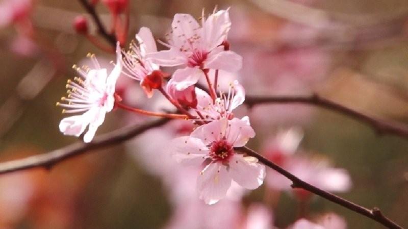 PROGNOZA METEO pentru două săptămâni. Cum va fi vremea până la Florii sau de Paştele Catolic
