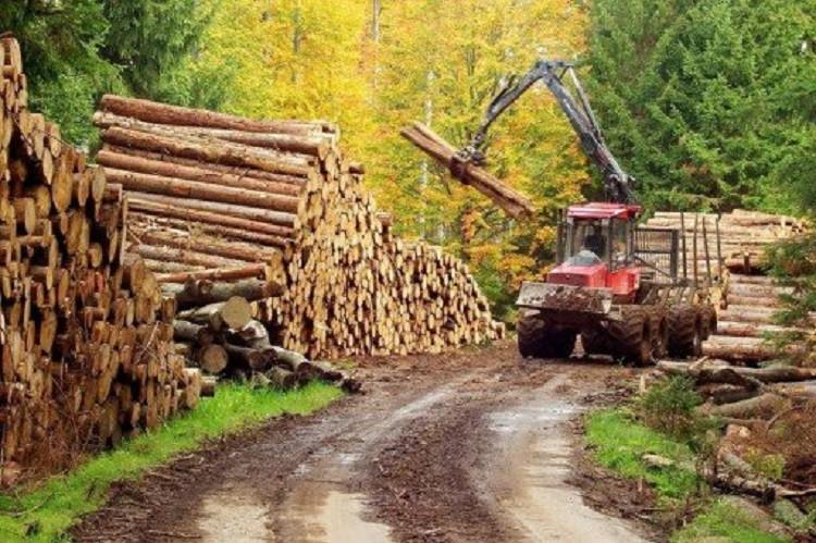 """Parlamentul a aprobat înființarea """"DNA-ului pădurilor"""""""