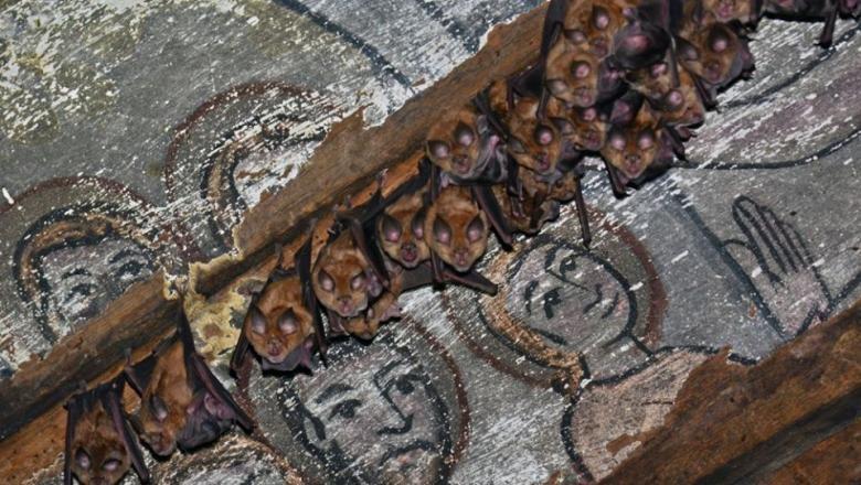 200 de lilieci din două specii protejate în România, descoperiți în timpul unor lucrări de restaurare la o bisericuță de lemn