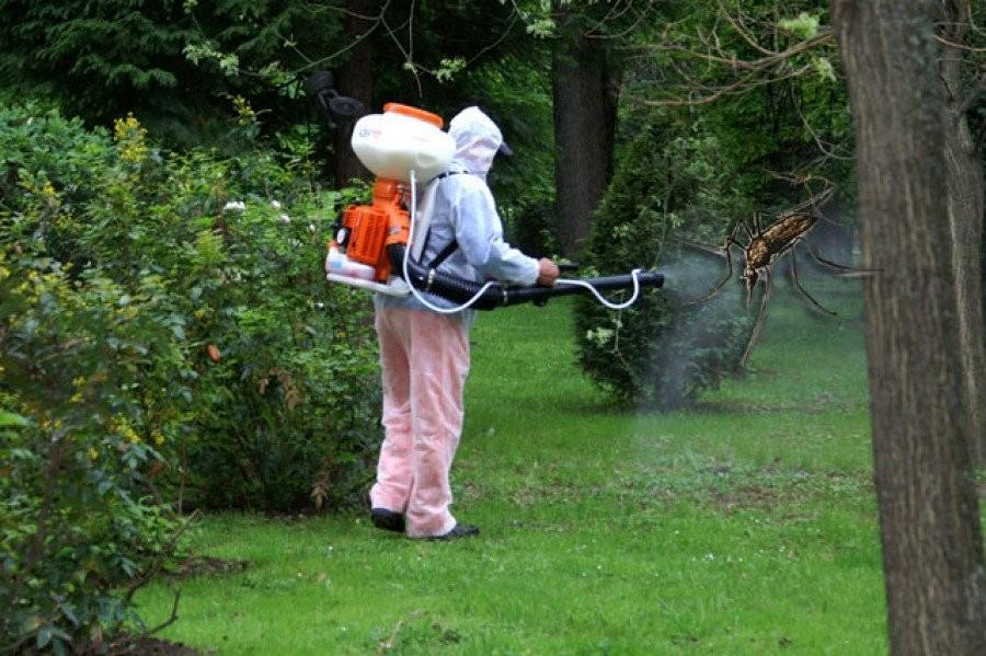 La Pecica se stropește împotriva țânțarilor; vezi când are loc operațiunea