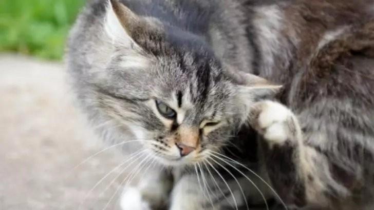 Cum să verifici dacă animalul tău de companie are purici. Semnul care trebuie să te trimită de urgență la veterinar