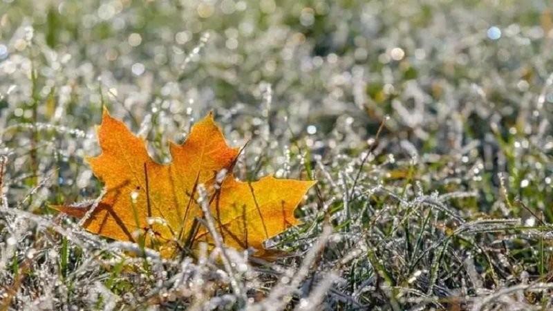 Vremea se răcește brusc: ploi și ninsori viscolite