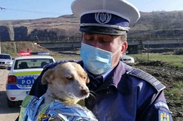 Poliția Animalelor. Peste 16 persoane pe un loc pentru posturile de polițist scoase la concurs