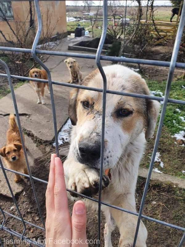 Peste 50 de câini ţinuţi de o femeie din Arad, eliberaţi de poliţişti şi preluaţi de o asociaţie