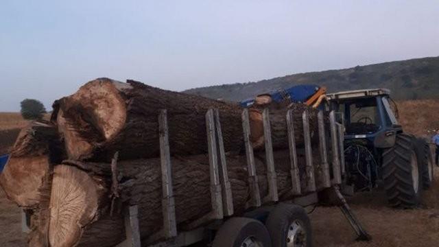 Cercetat pentru tăiere ilegală și furt de arbori