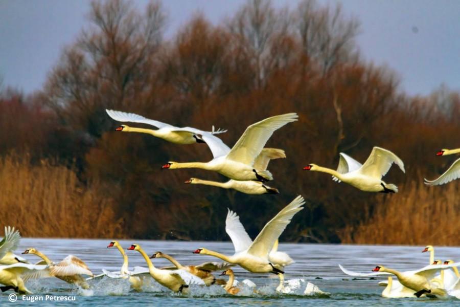 Ziua internațională a Păsărilor, sărbătorită în mediul online de SOR