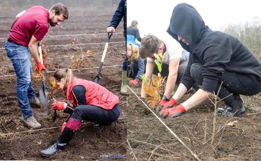 """""""Codrii de mâine"""" - o nouă acțiune de împădurire organizată de Asociația Principele Nicolae"""
