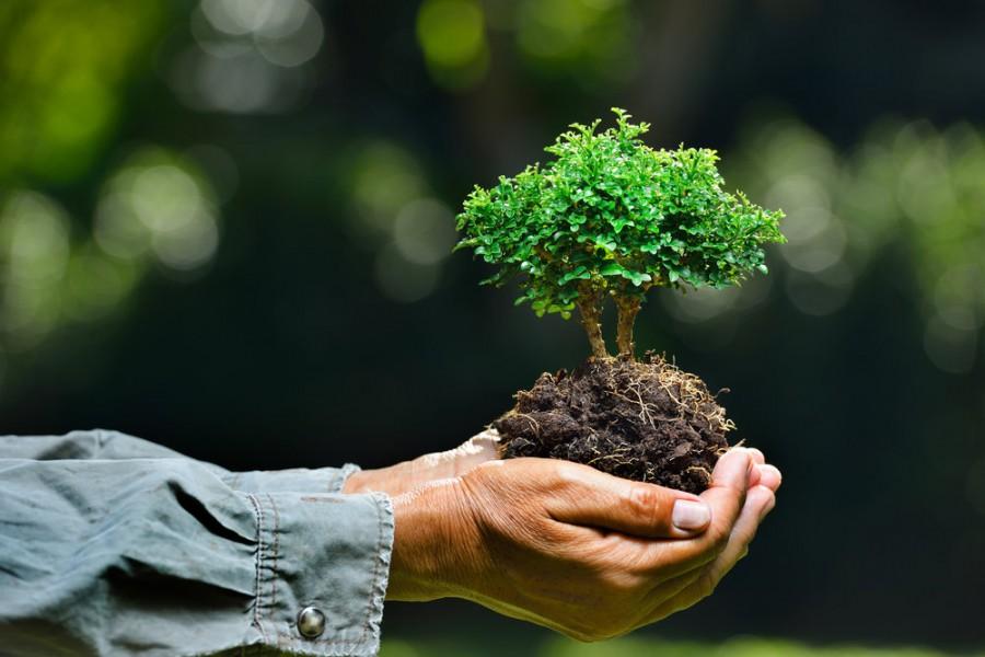 """Ziua mondială a mediului înconjurător are ca temă în 2021 """"Restaurarea ecosistemelor"""""""