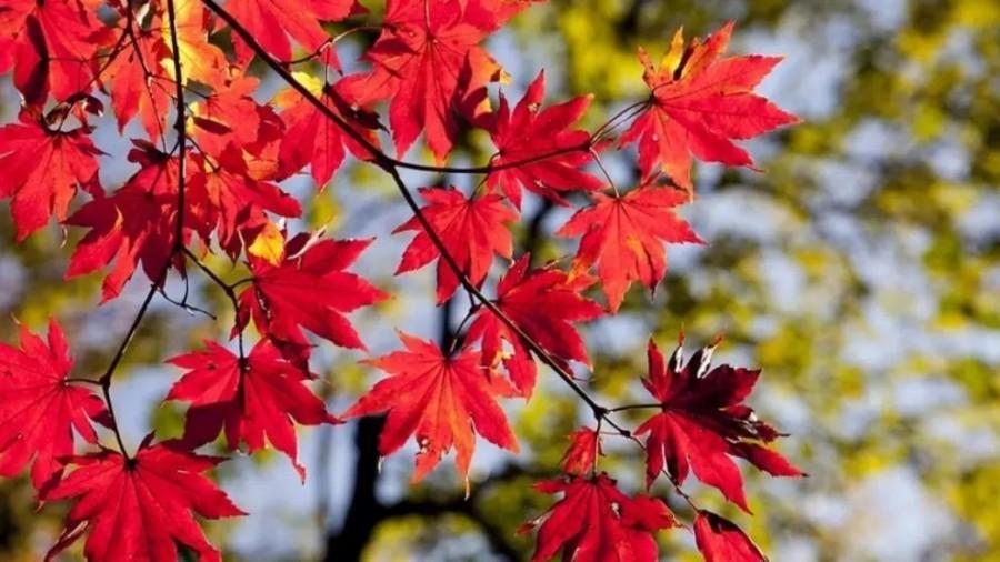 Toamnă blândă în octombrie - Prognoza meteo pentru următoarele 4 săptămâni. Unde se vor înregistra ploi