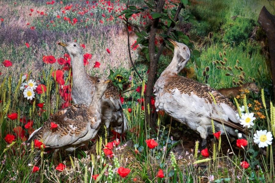 Exponatul lunii octombrie la Complexul Muzeal Arad / Muzeul de Științe ale Naturii